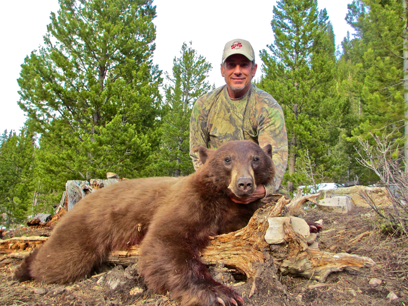2014 wyoming spring black bear hunts are underway. Black Bedroom Furniture Sets. Home Design Ideas