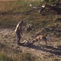 Antelope Rescue on Locked-Up Bucks