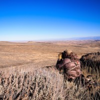 Top 5 Tips for Stalking Mule Deer