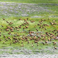 Wyoming Hunters Will Benefit from 2015 Winter Conditions