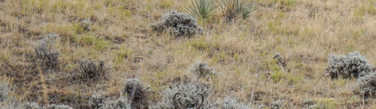 Application Period Open for Nonresident Antelope and Deer