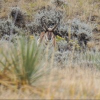 An Antelope Hunting Photo Journal