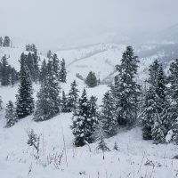 Wyoming Winter Range and Wildlife Conditions Update