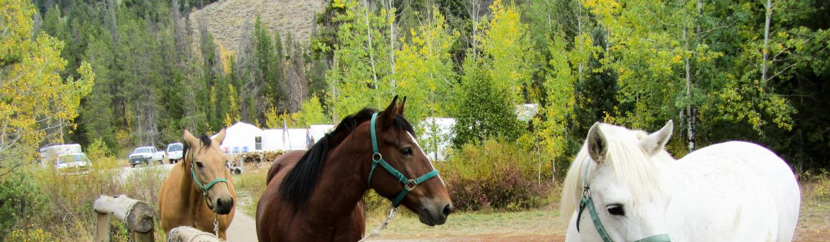 Summer Horseback Riding With Jackson Hole Outfitters