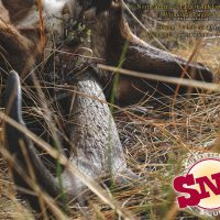 2017 Edition SNS Outfitter and Guides Hunting Brochure