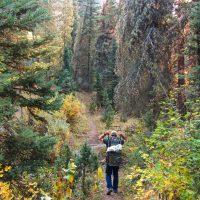 Fall Black Bear Hunting Season Preparation: Bear Baiting