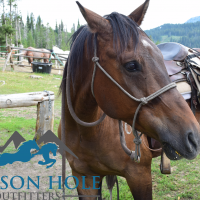 Summer Activity: Horseback Riding with Jackson Hole Outfitters