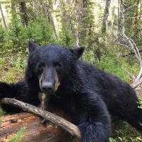 The 2019 Fall Black Bear Season is Underway!