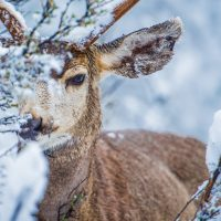 Chronic wasting disease: My perspective