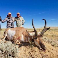 Pronghorn Antelope 101