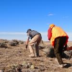 Pronghorn Antelope Hunts
